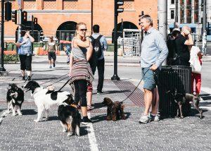 Hunde Begegnung mit Mensch und Hund