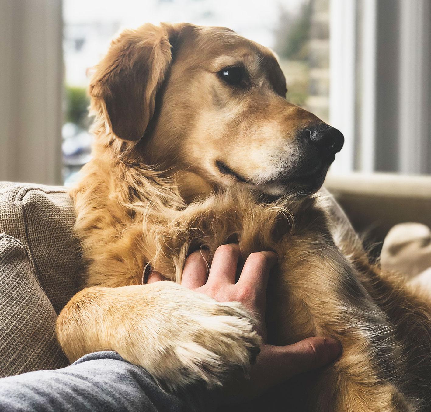 Entspannen mit dem Hund