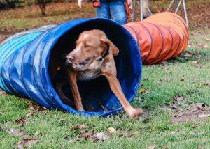 Fun A.H.A für Hunde