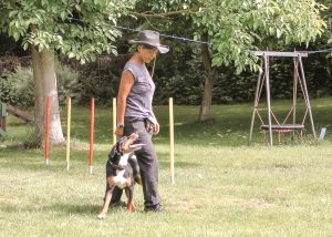 Frau mit Hund beim Trick Dog. training - Agility, Hoopers, Ausdauer