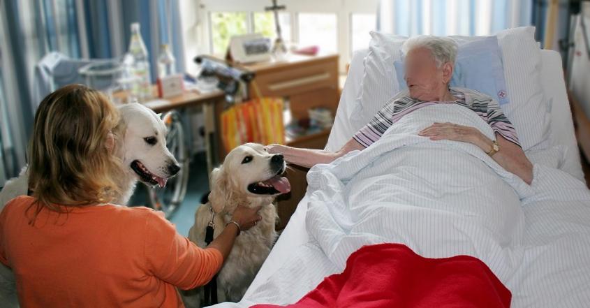Sozialer-Besuchsdienst im Alten- und Pflegeheim