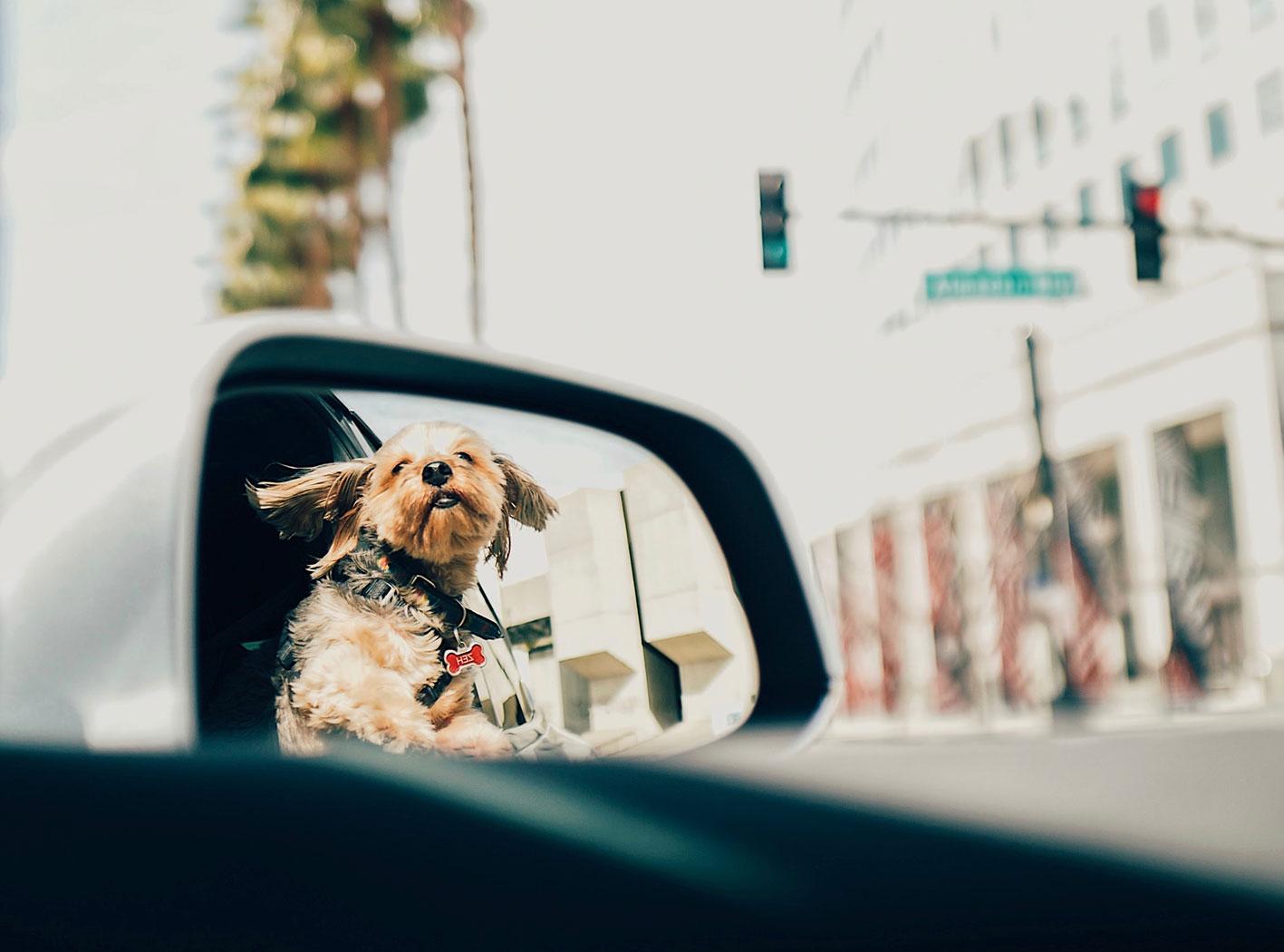 Hund fahrt mit im Auto - Hunderführerschein