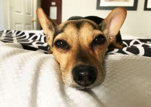 """aus meinem aufgeregten Hund wurde ein """"Cooler"""" Hund!"""