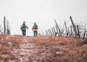 Nordic Walking mit deinem Hund