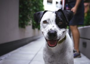 Entdecke die Körpersprache deines Hundes