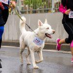 Joggen, laufen, Nordic Walking mit Hund