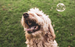Empathie deines Hundes