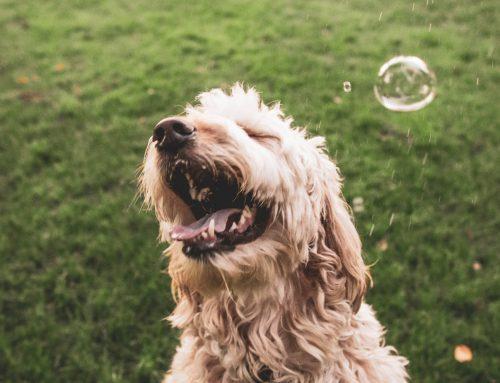 Die Empathie deines Hundes